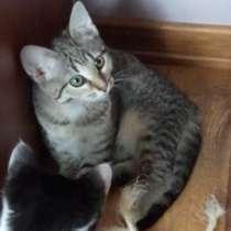 Котенок в добрые руки, в Зеленограде