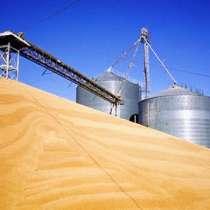 Мука и отруби пшеничные производства Казахстан оптом, в г.Костанай