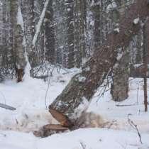 Спил деревьев, в Дубне
