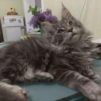 Котенок мейн кун продам, в г.Днепропетровск