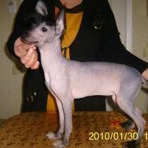 Социализация и дрессировка собак мелких пород, в Пятигорске
