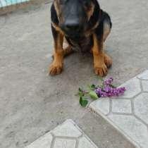 Продам собачку в ооочень добрые руки!!!, в г.Бишкек