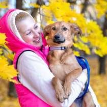 Собачка 12 кг, в добрые руки!, в Москве