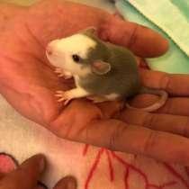 Крысята, в Нягани
