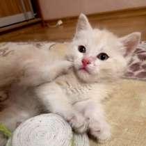 Котенок 1,5 мес в добрые руки. Малыш Абрикосик, в Москве