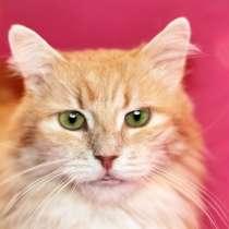 Шикарный кот Мускат ищет дом, в дар, в Москве