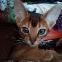 Абиссинские котята дикого окраса, в г.Жлобин