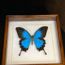 Бабочки, в Новомосковске