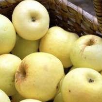 Отдам яблоки бесплатно, в Домодедове