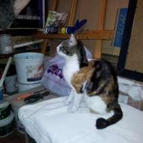 Молодая трёхцветная кошка, в Ростове-на-Дону