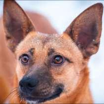 Чудесная собака Апельсинка ищет дом!, в Москве