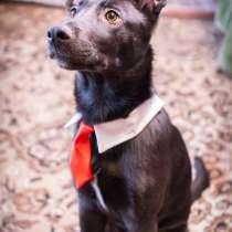 Ищет дом самый модный и самый позитивный пес Мирон, в Москве