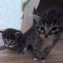 Отдам котят родились 18 марта !Очень умная МАМА!, в Химках