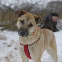 Ласковая собачка Ева ищет дом, в Москве
