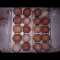 Яйца куриные, в Иванове