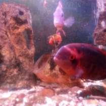 Рыбки аквариумные, в Нижнем Новгороде