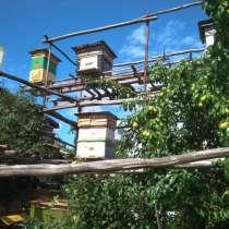 Пчёлы продаю с ульями и без ульев, в Новочебоксарске