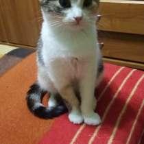 Отдам в хорошие руки трехцветную девочку-котенка, в Батайске