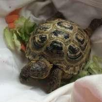 Сухопутная черепаха, в Нефтекамске