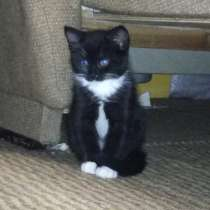 Котята 2 месяца. 2 кота и кошечка, в Твери