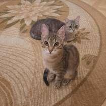 Отдадим в добрые руки кошечку и котика, в Краснодаре