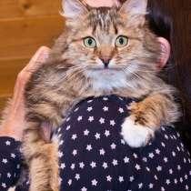 Кошечка Фиона в добрые руки, в Москве