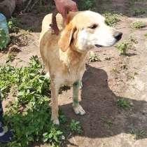 Нашел собаку, в Богородске