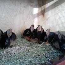 Редкие крольчата, в Челябинске
