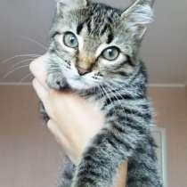 Котята спешат завоевать ваше сердце, в Краснодаре