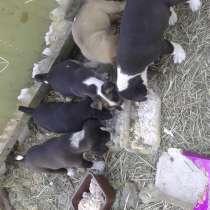 В хорошие руки семь щенков, в Новочеркасске