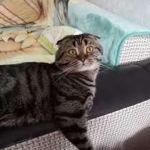 Отдам кота, в Тюмени