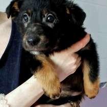 Ищем дом или домашнюю передержку замечательному щеночку Люше, в Москве