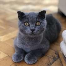 Продам шотландских вислоухих котят, в г.Стамбул