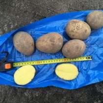 Картофель оптом, в Нижнем Новгороде
