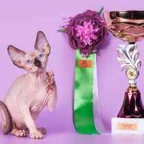 Бархатный котёнокЭльф, сфинкс, бамбино, с чувственной душой, в Ростове-на-Дону