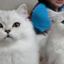 Роскошные котята в домашние любимцы, в Уфе