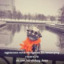Экскурсии калининградские , в Москве