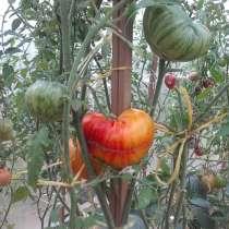 Редкие сорта томатов, в Москве