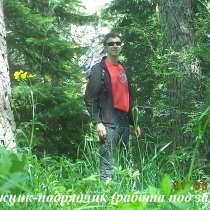 Заготовка дикорастущих плодов и растений, в Томске