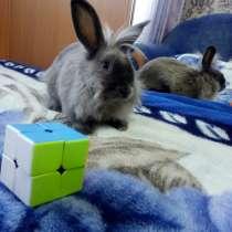 Львиноголовый крольчонок, в г.Орша
