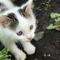 Котёнок, в Набережных Челнах