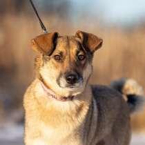 Замечательная собачка Буся ищет дом, в Москве