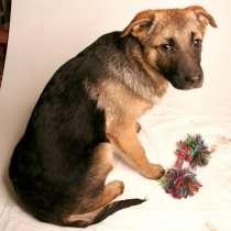 Малыши ищут семью: собачки в дар, в Москве