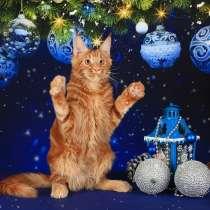 Продажа котят породы мейн-кун, в Астрахани