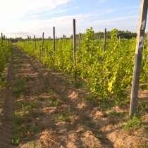 Продам Виноградник плодоносящий, в г.Херсон
