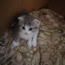 Красивые котята, в Нижнем Новгороде