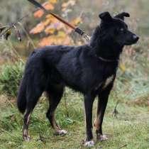 Черный изящный пёс-красавчик, в Санкт-Петербурге