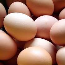 Инкубационное яйцо, в Кузнецке