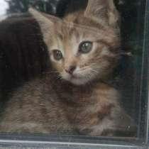 Котята в добрые руки, в Видном