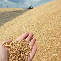 Декларация на зерно, в Таганроге